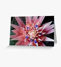Tropical Zone Greeting Card