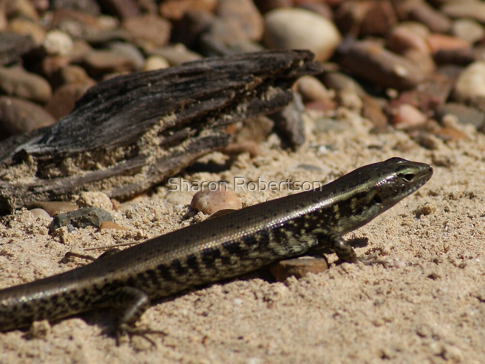 I'm the lizard, not the bark... by Sharon Robertson