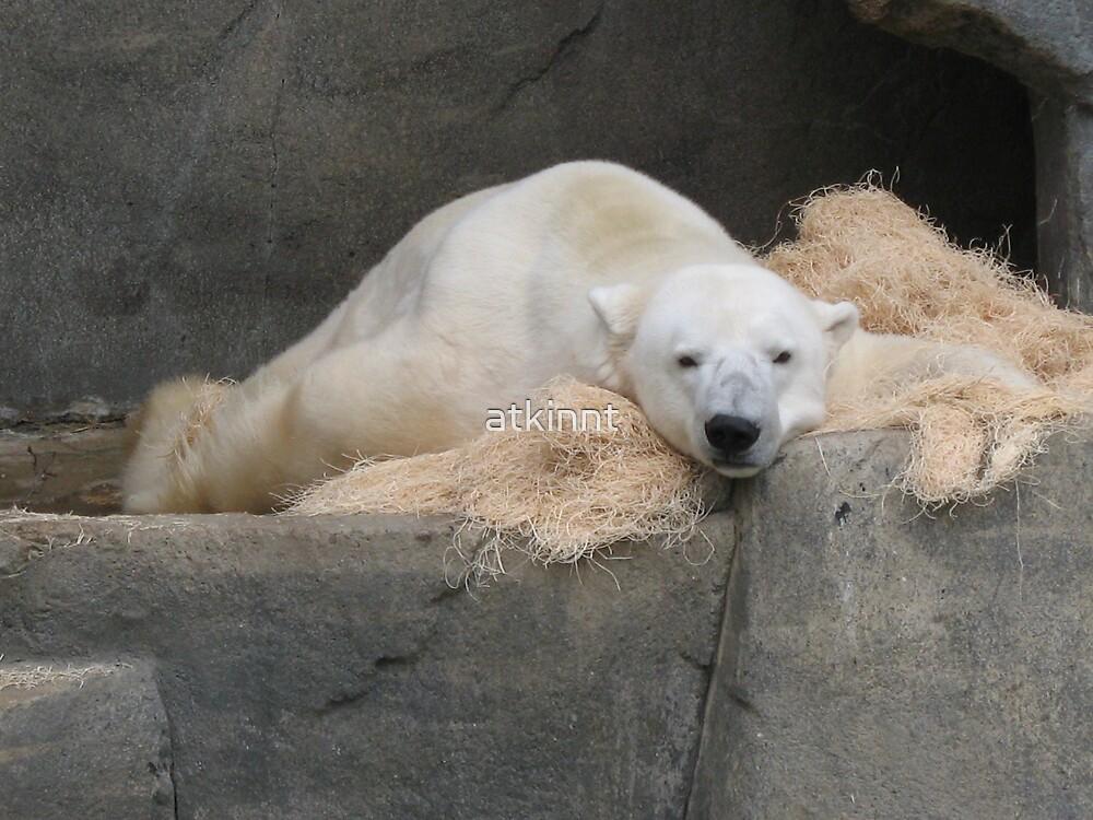 Polarbear by atkinnt
