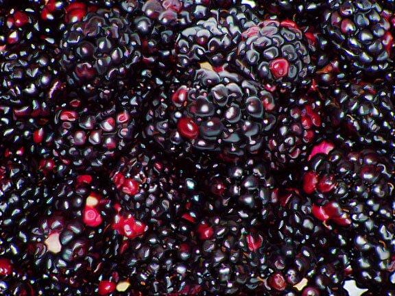 blackberries aren't even black by scarlettheartt