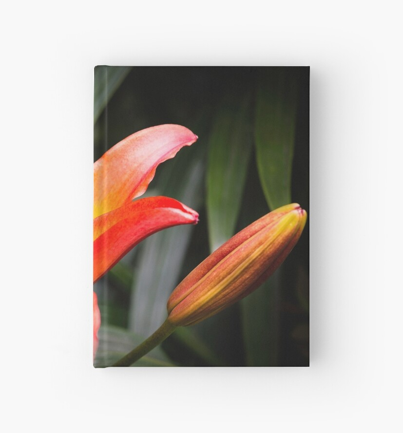 Lillies by David Lewins