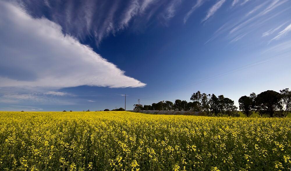 Triangular cloud and canola field by Akif  Kaynak