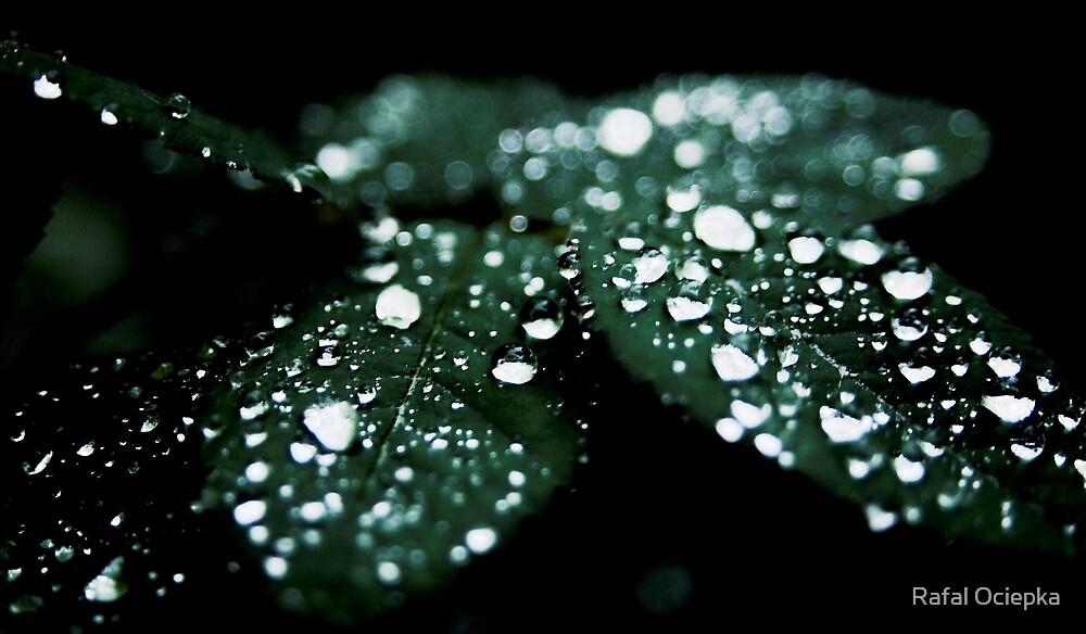 dew drops by Rafal Ociepka