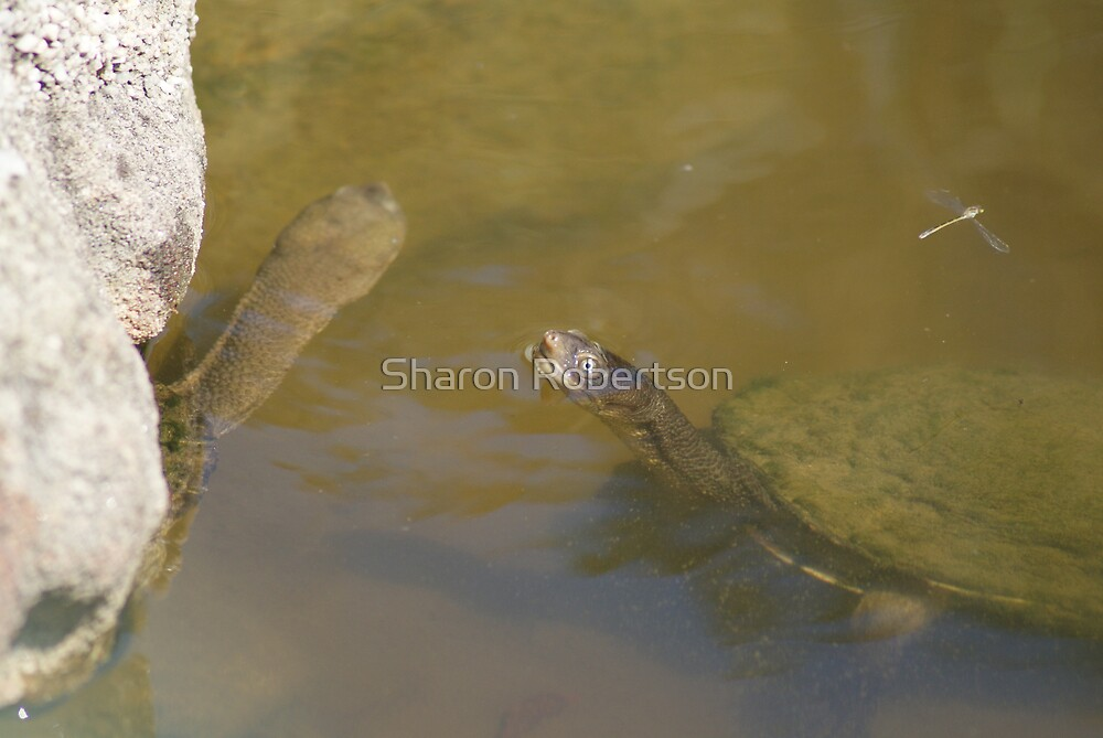 Was that my Dragonfly or yours? by Sharon Robertson