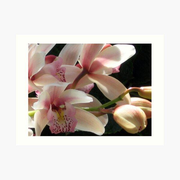 Orchids - 2 Art Print
