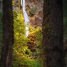 Starvation Creek Falls by Owed To Nature