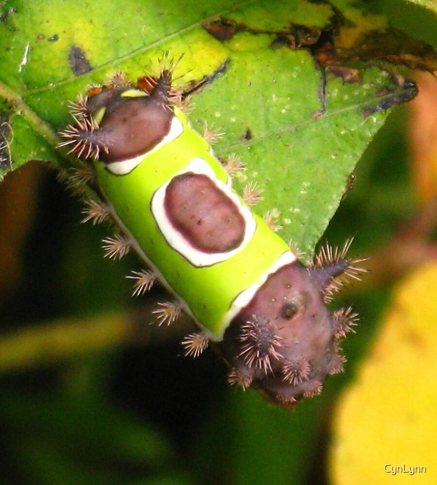 Saddleback Caterpillar by CynLynn