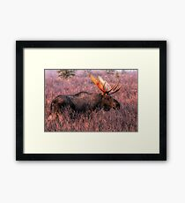 Bull Moose - In The Mist Framed Print