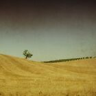 Tuscany V by marziafrank