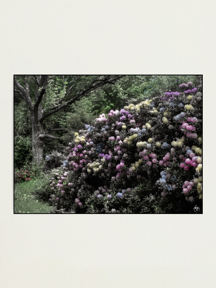 Alternate view of The Painted Rhodie Photographic Print