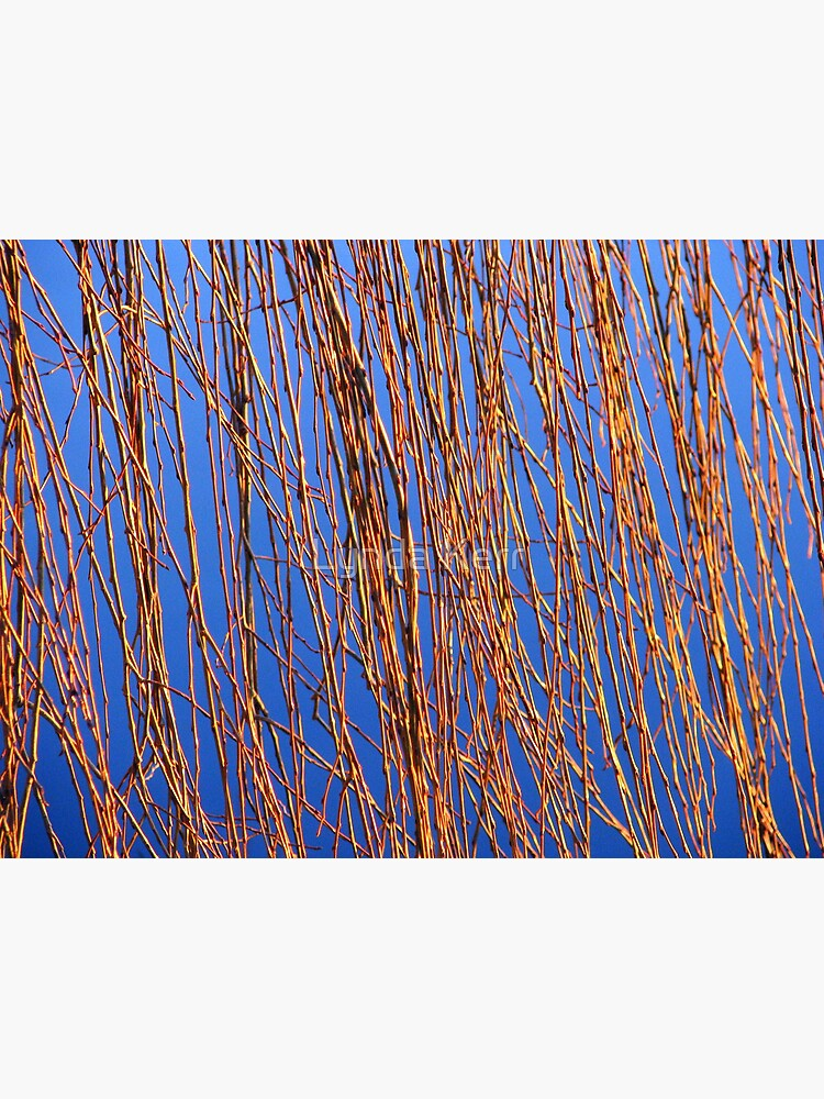 Reeds by 4sure