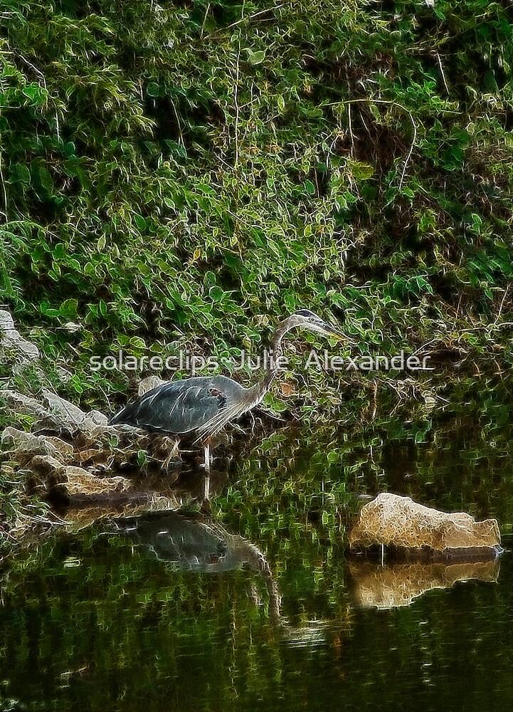 Blue Heron shhhhhh...... by solareclips~Julie  Alexander