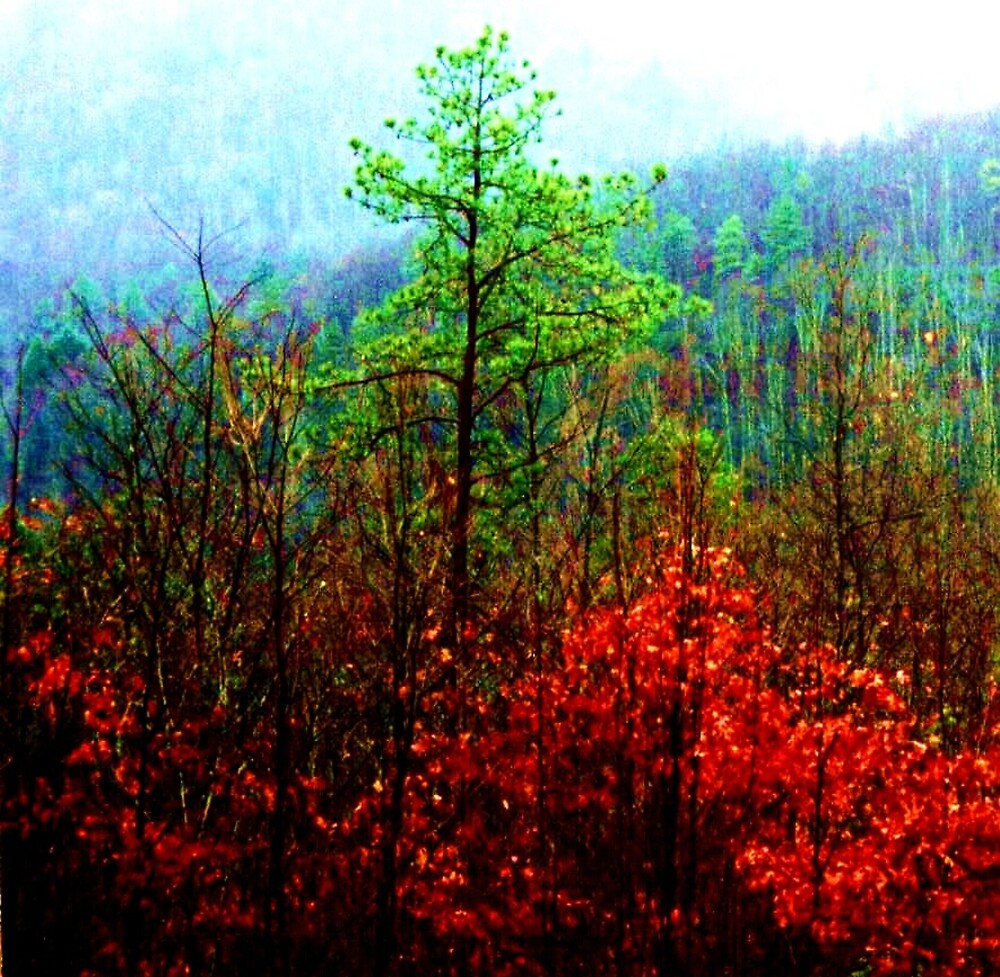 Cumberland Gap by Marie Monroe