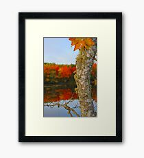Beauty and the Birch Framed Print