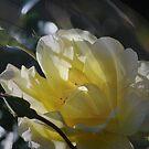 Streams of  Morning Light by Lorraine Mccarthy  by Lozzar Flowers & Art