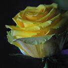 Madam Rose by  Lorraine McCarthy by Lozzar Flowers & Art