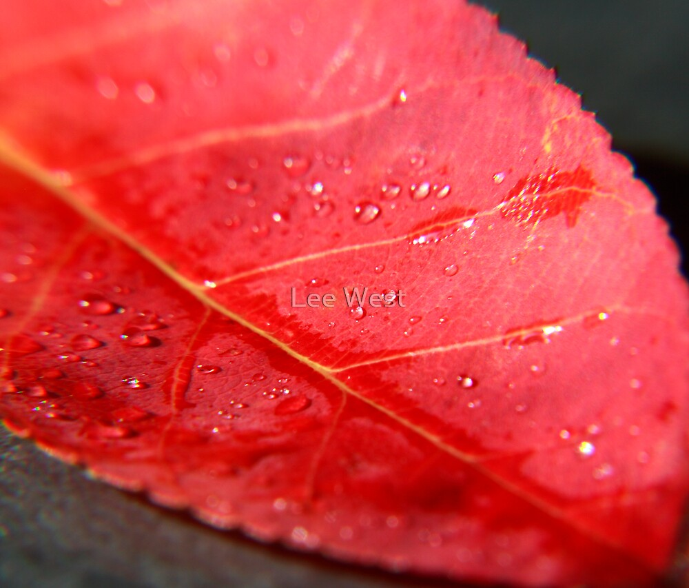 Another Red Leaf by Lee West
