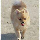 Happy Pup, Pink Tongue by IrishEyesMrsZ