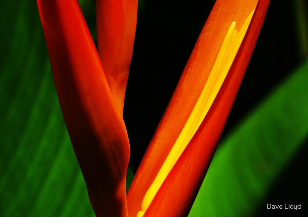 Fire Flower by Dave Lloyd