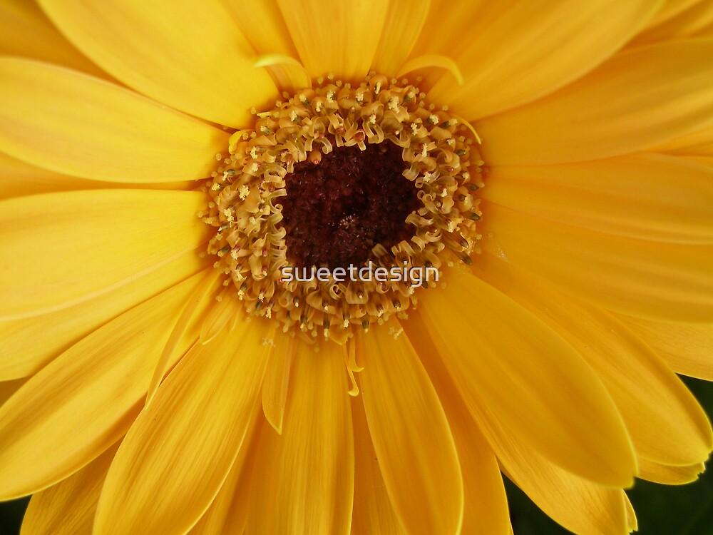Yellow  by sweetdesign