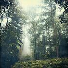 Forest Clearing - Jungle II by Dirk Wuestenhagen