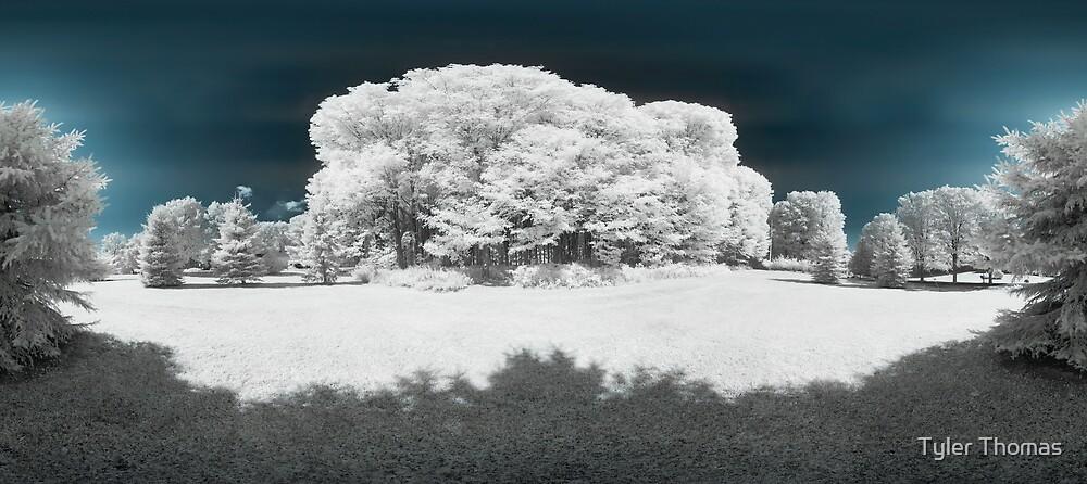 Trees by Tyler Thomas