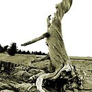 Old Tree by artsphotoshop