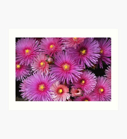 Beautiful Pink Pigface Flowers Art Print