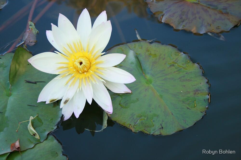 Fresh Bloom by Robyn Bohlen