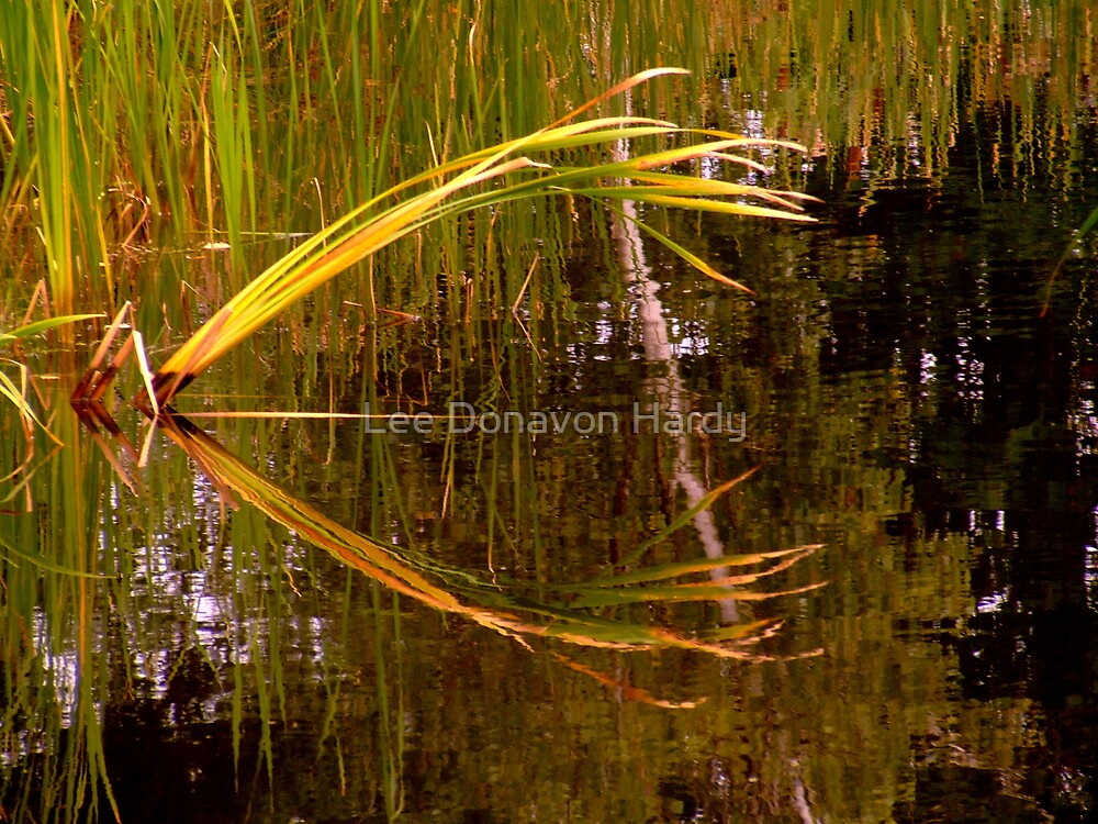 Reflections - Woodland Pond by Lee Donavon Hardy