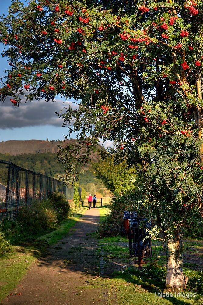 Autumn colours by Thistle Images