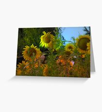 Girasoli Greeting Card
