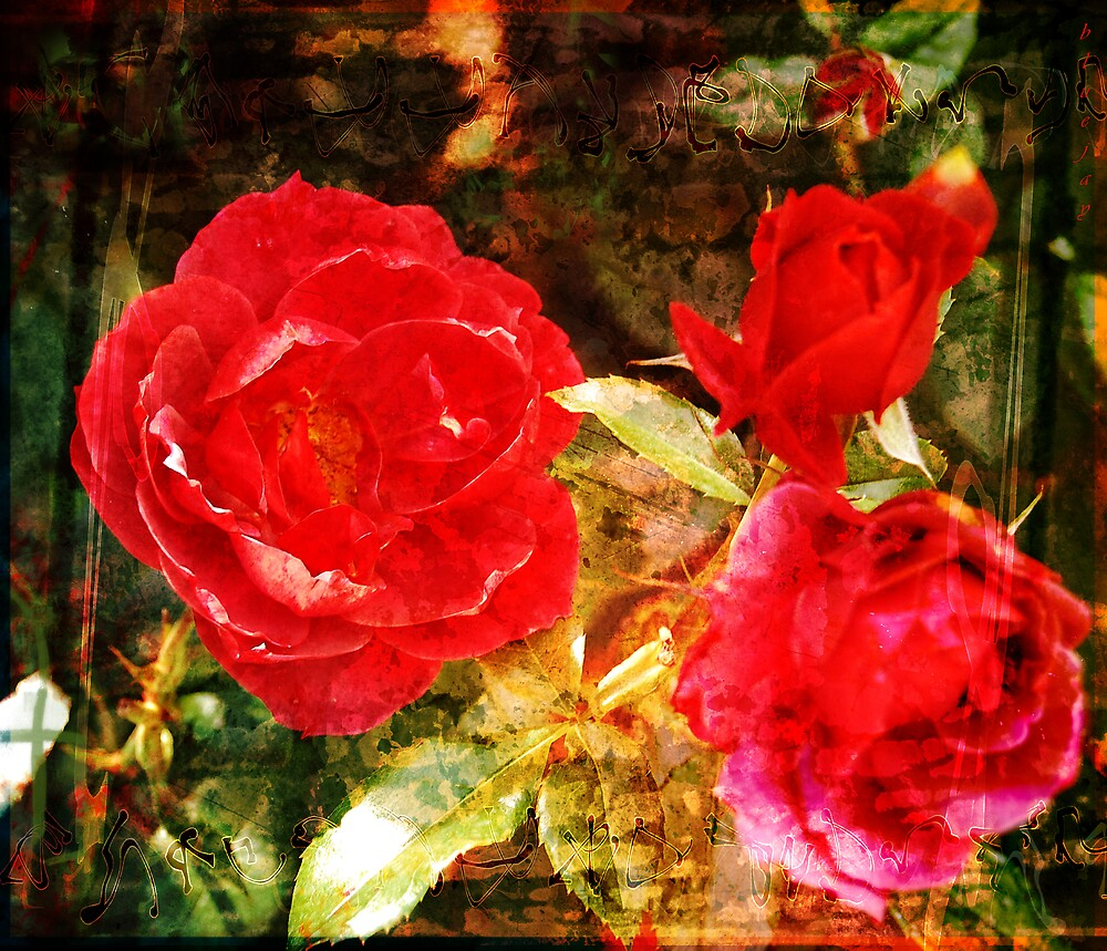 Textured roses by bluejay