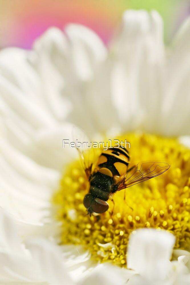 Honey Honey by February13th