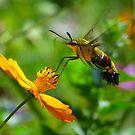 A Gentle Kiss for my Honey by kibishipaul