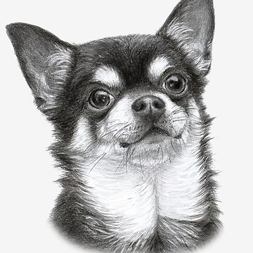 Chihuahua by Danguole