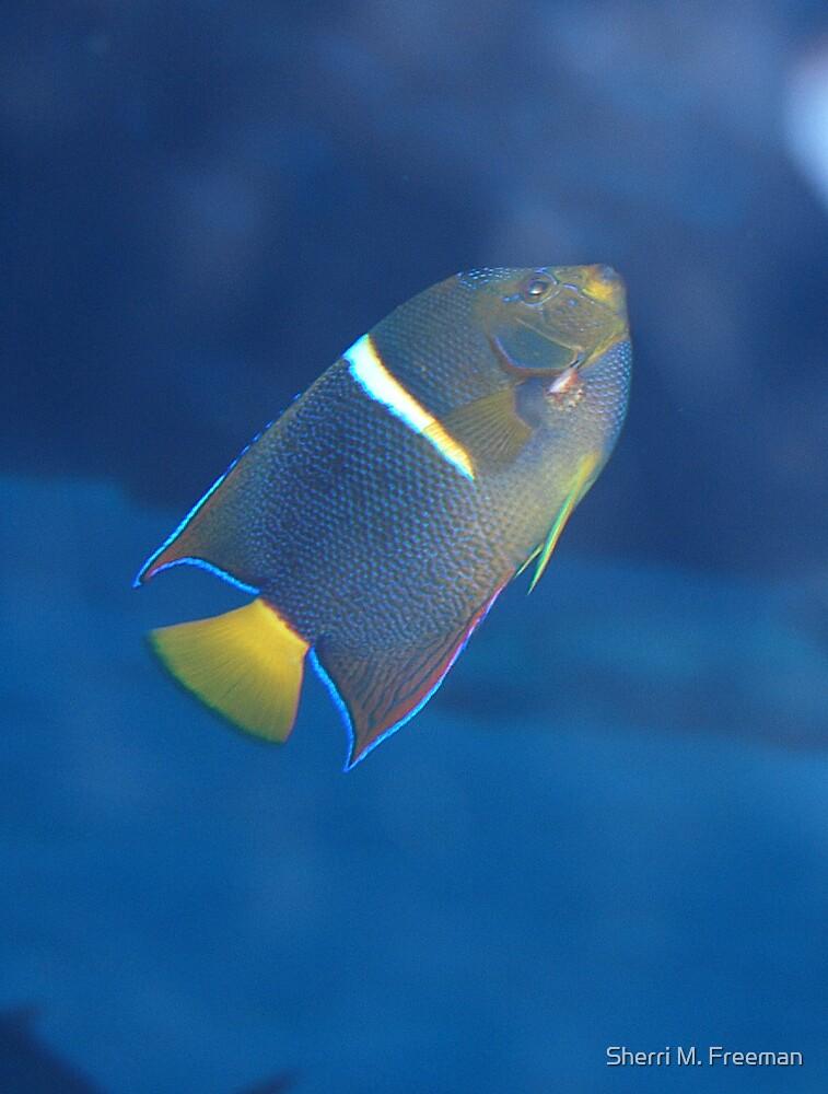 Lonely fish by Sherri M. Freeman