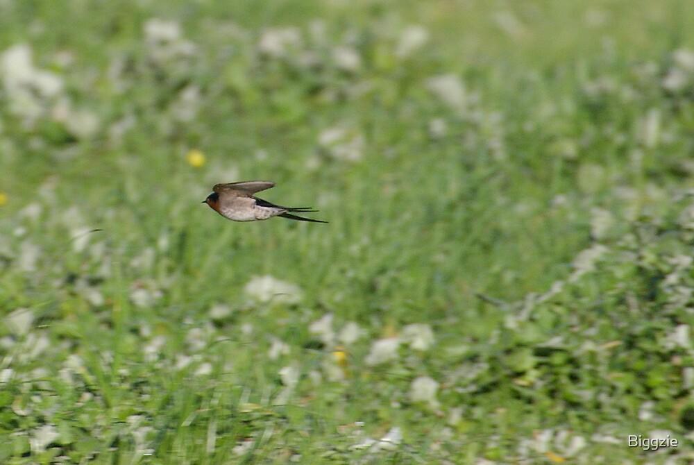Fly By 3 by Biggzie