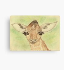 Sweet Baby Giraffe Canvas Print