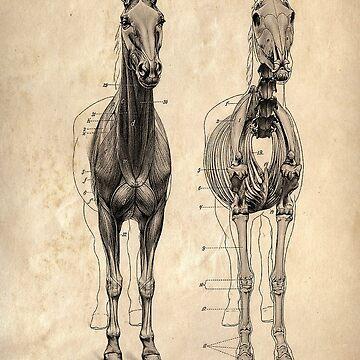 Vintage Horse Skeleton Diagram Picture by Tee-Art