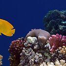 Colorful Coralreef by hurmerinta