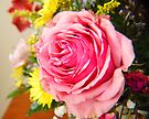 Pink Rose by G. David Chafin