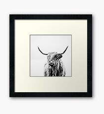 portrait of a highland cow Framed Print