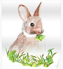 Love The Bunny! Poster