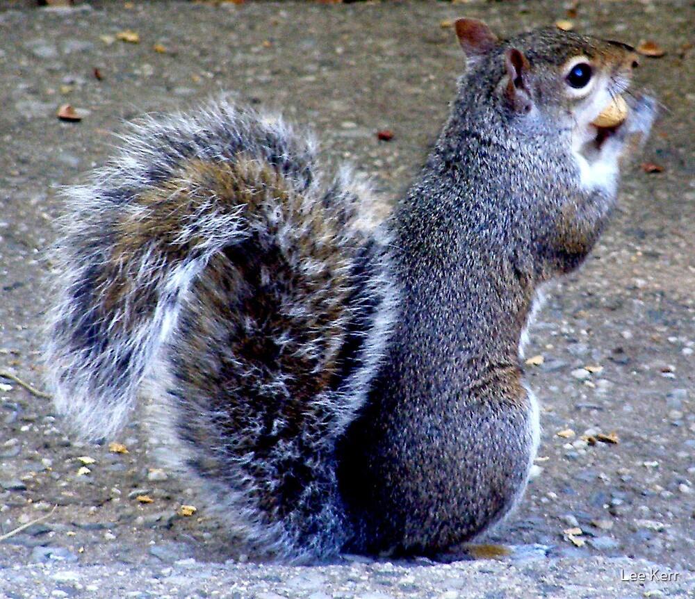 Oh Nuts!! by Lee Kerr