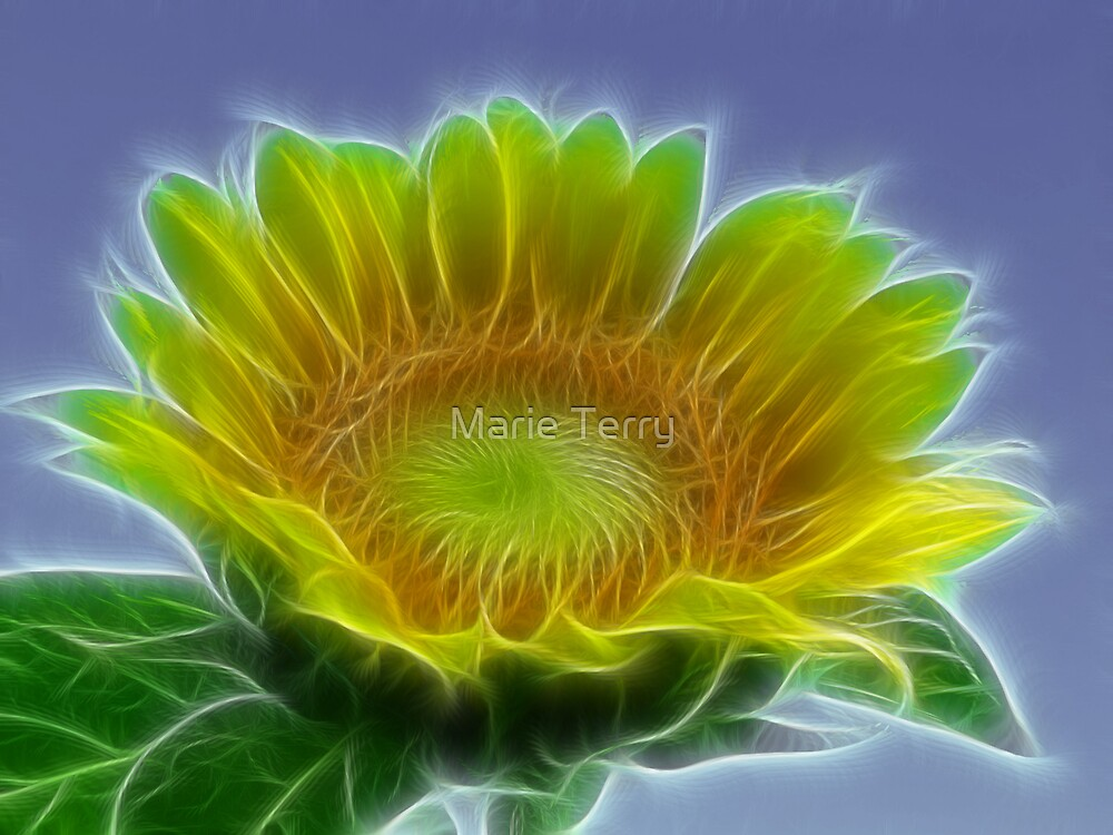 Sunflower by Marie Terry
