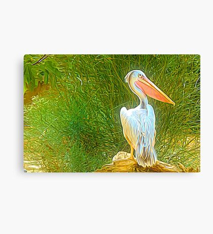 Once Upon A Time There Was A Pelican..... Canvas Print