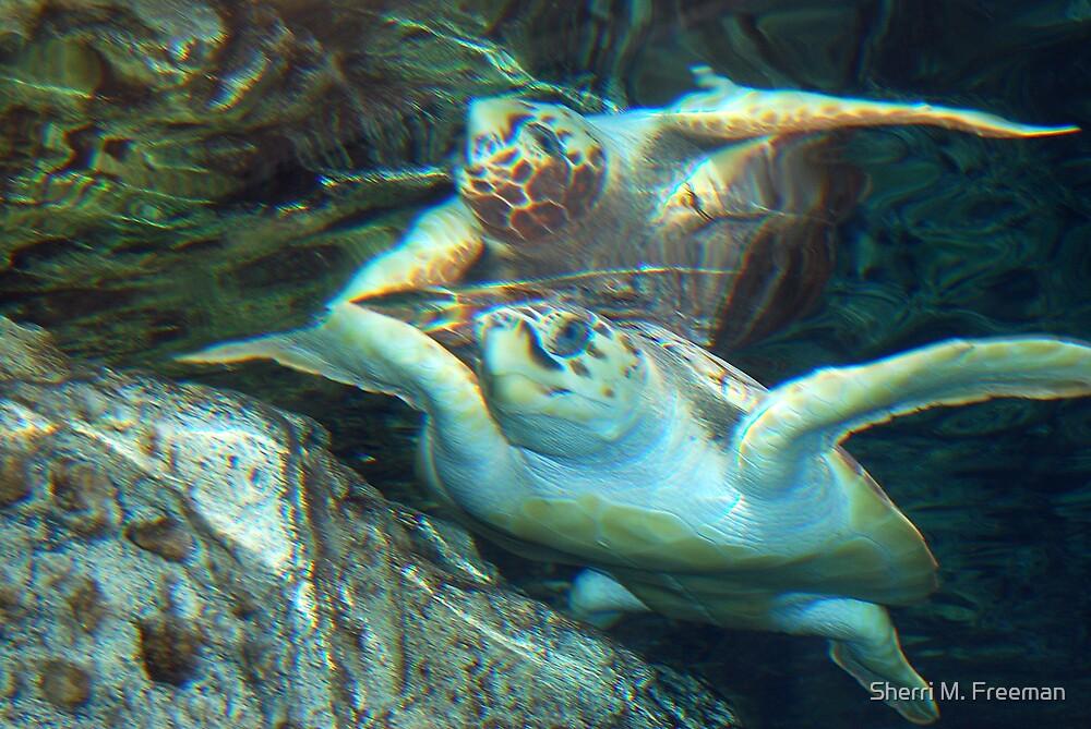 Sea Turtle by Sherri M. Freeman