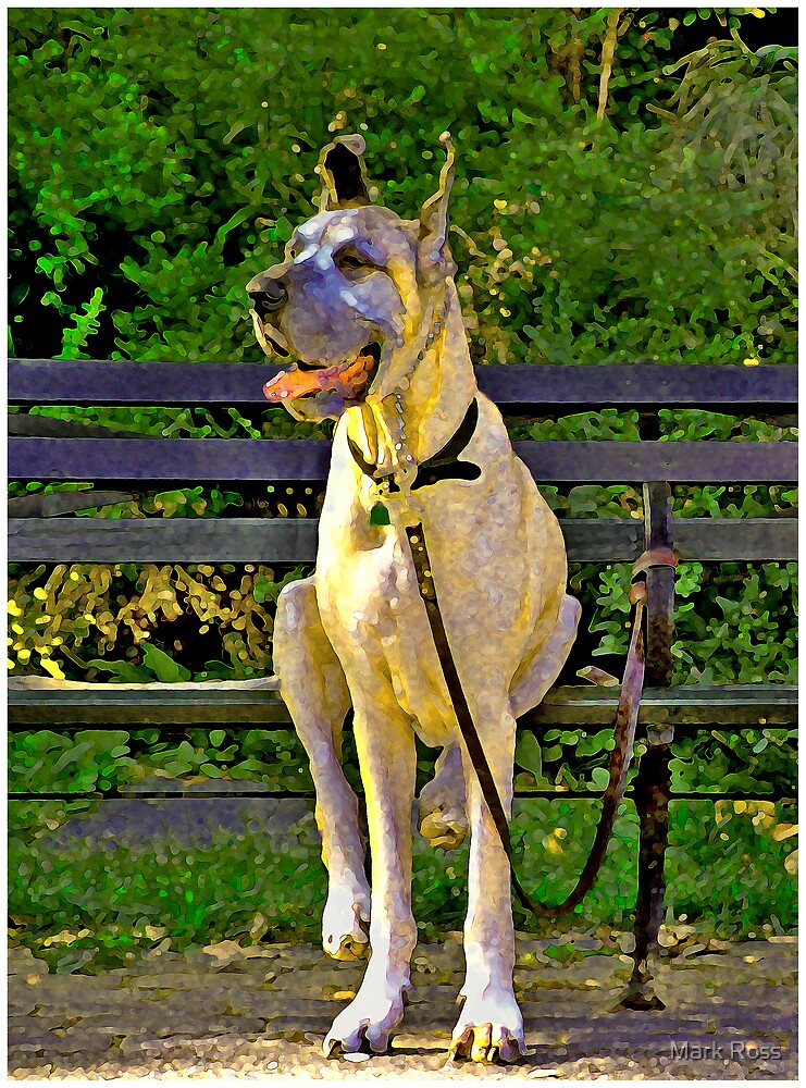 Sitting Dog by Mark Ross