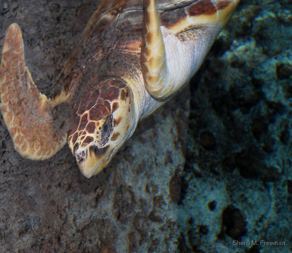 Sea Turtle by Sherri M. Freeman